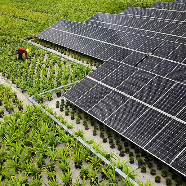 Luzma Solar placas y agricultura